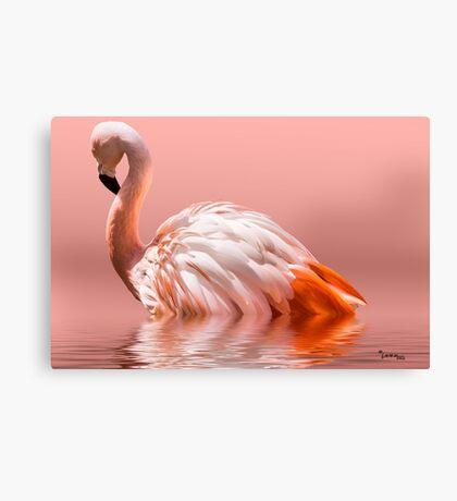 Flamingo-2010 Canvas Print