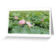 ubud lilies Greeting Card