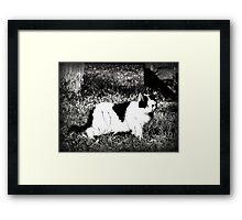 Stalking Framed Print