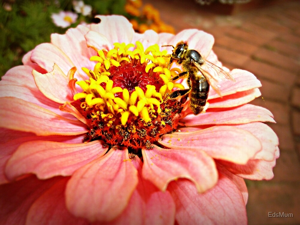 Gerbera & Bee- Donegan's Farm by EdsMum