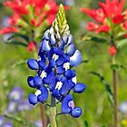 Texas Bluebonnet and Indian Paintbrush by Nick Conde-Dudding