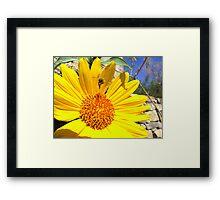 Pollination Series ~ 1 Framed Print