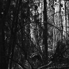Dark to light by Pirostitch