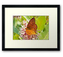 Orange Tiger Butterfly On Pink Flowers Framed Print