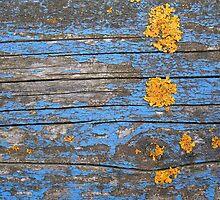 Yellow lichen on blue bench by Elisabeth van Eyken