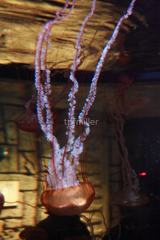 Las Vegas, NV: Jellyfish by tpfmiller