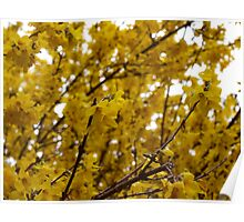 yellow brightnes Poster