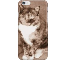 Peaceful-looking Cat iPhone Case/Skin