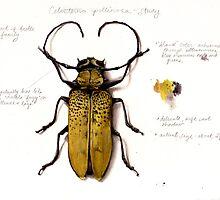 Celosterna pollinosa by MaryKatC