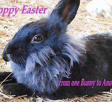 Hoppy Easter by Joni  Rae