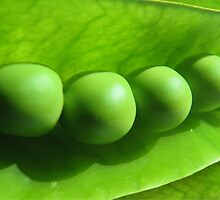 Green Peas by kuma-x