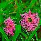 Tiny Pink Weeds by Jen Waltmon