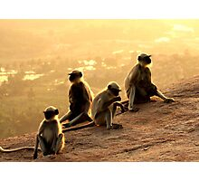 This Looks Like More Fun Than A Barrel Of Monkeys! Photographic Print