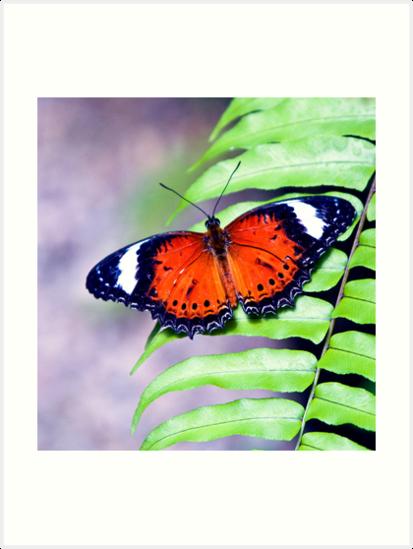 Wings by Jenny Dean