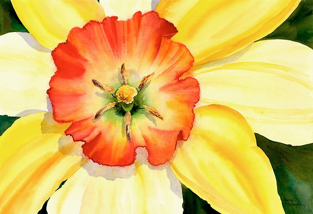 Daffodil by artbyrachel