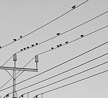 Birdies on a Wire by Michael Jeffery