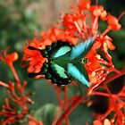 Butterfly by Kenric A. Prescott