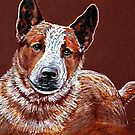 Murphy, The Cow Dog by Susan Bergstrom