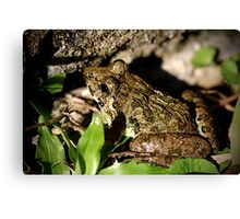 Rice Paddy Frog 4 Canvas Print