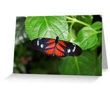 Butterly Beauty Greeting Card