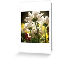White flowers beautiful nature Greeting Card