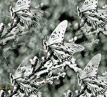 Garden of Wings by Pat Moore