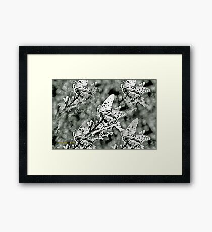 Garden of Wings Framed Print
