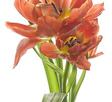 Sweet Tulips by Ann Garrett