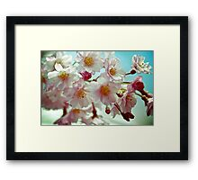 Close-up of Cherry Blossom. Queens Botanical Garden Vintage Retouched Framed Print