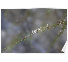 Very tiny flower Poster