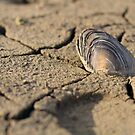 A shell in a dry lake by Michel Raj