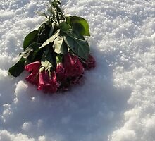 rose in snow by ednaelliott