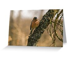 Chaffinch in tree Greeting Card