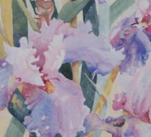 Mauve Iris Sticker
