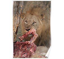 Lion's dinner Poster