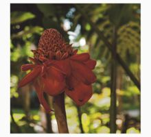 Red Torch Ginger or Ginger Lily in Hawaii Kids Clothes