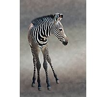 Dreams in Black and White (Grevy's Zebra) Photographic Print