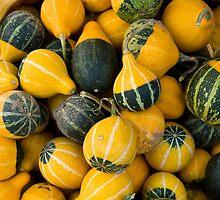 Pumpkins by Klaus Offermann