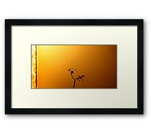 Midas' Touch Framed Print
