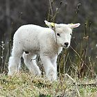 Easter lamb by Alan Mattison