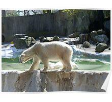 Polar Bear: Invisible Restraints Poster