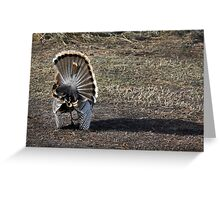Just Me and My Shadow, Wild Turkey Style Greeting Card