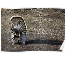 Just Me and My Shadow, Wild Turkey Style Poster