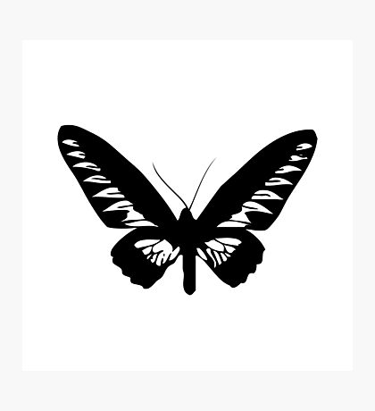 Black Butterfly Vector Art Photographic Print