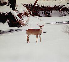 080706-89  WINTER WILDERNESS by MICKSPIXPHOTOS