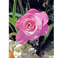 A Birthday Rose Photographic Print
