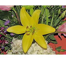 Yellow Birthday Lily Photographic Print