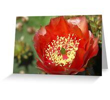 Desert Fire Blossom Greeting Card