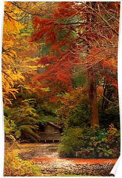 Autumn in the Dandenongs  by Margot Kiesskalt