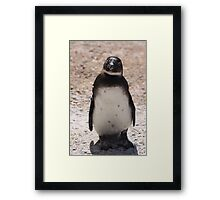 sweet penguin Framed Print